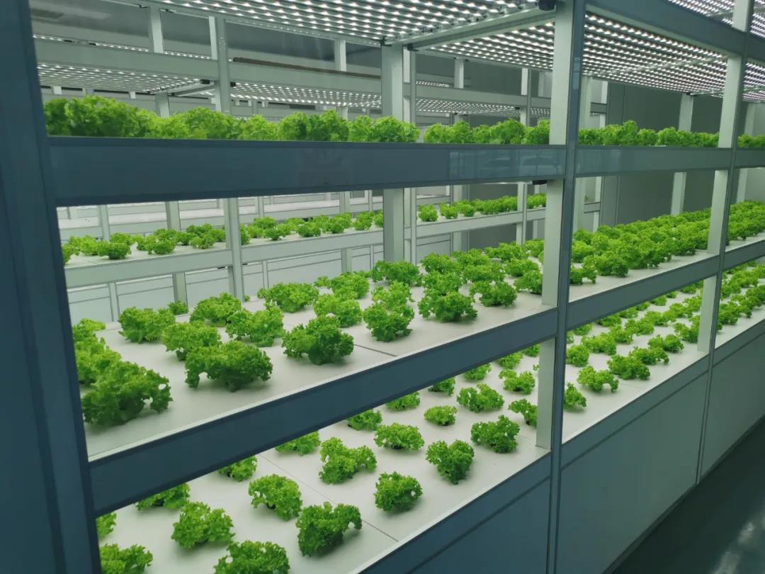 南通市首个全电智慧植物工厂满满科技范儿