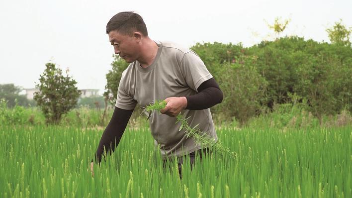 启东寅阳镇长兴村:村企联建 蹚出乡村富民路
