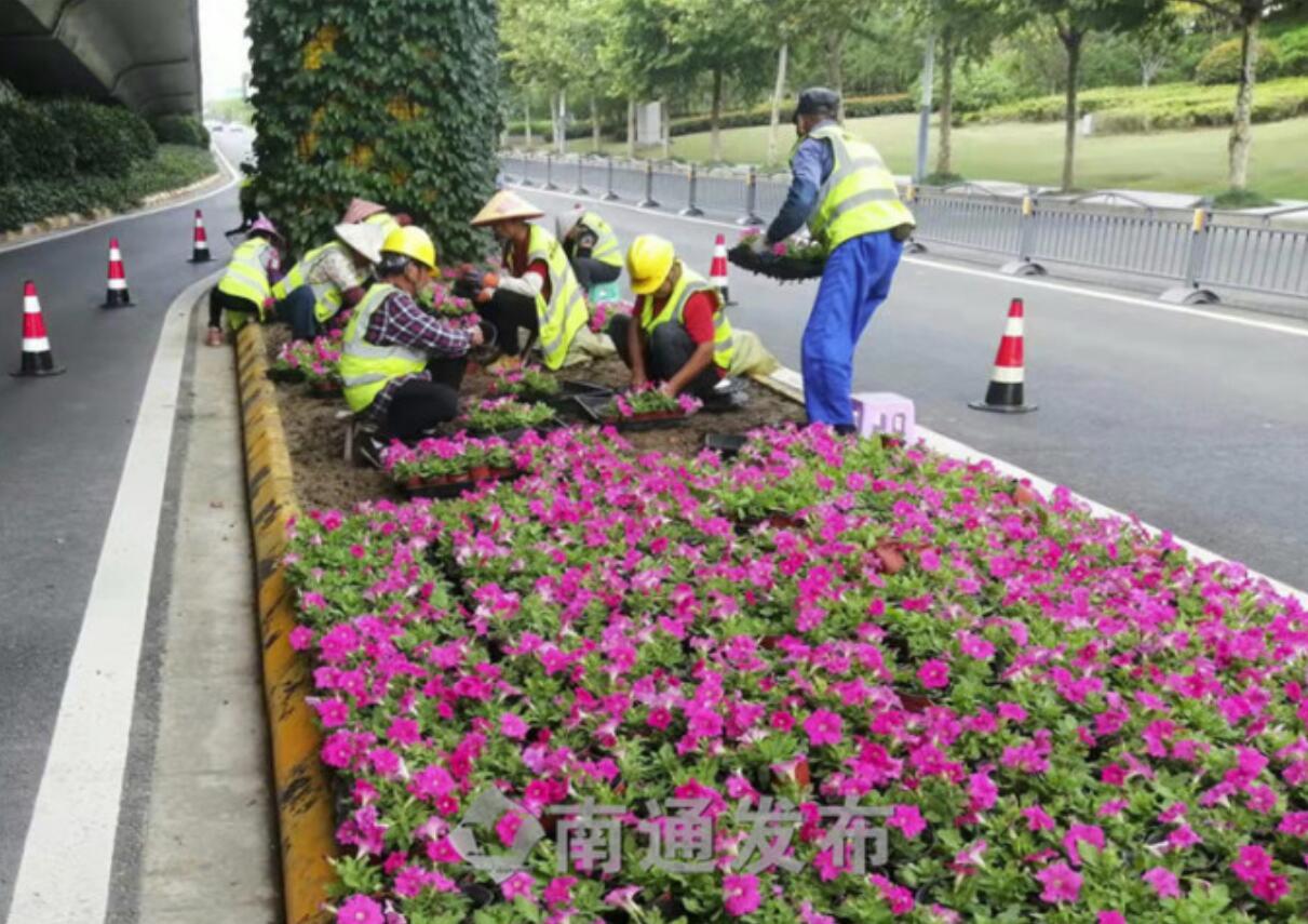 国庆佳节期间  600余名园林绿化一线工人坚守岗位